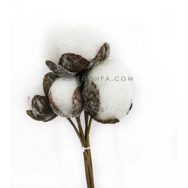 زهرة القطن 1