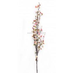 غصن أزهار الربيع